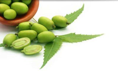 health benefits of neem in kannada
